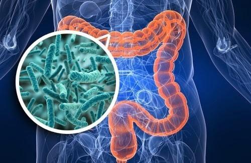 """Featured image for """"The Importance of a Healthy Microbiome"""""""